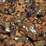 Chocolate Chip-Pretzel Bars
