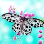 NJ Butterfly Festival