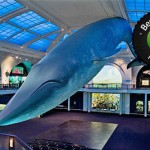 discounts to the American Museum of Natural History
