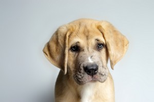 adopting a dog from a shelter
