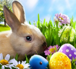 easter, bunny, eggs, spring