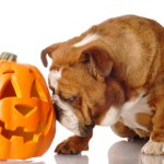 How to Ensure a Safe, Unscary Halloween for Your Pup