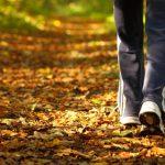 trail, hiking trail, walking