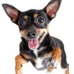 Irritable Pet bowels rejoice!