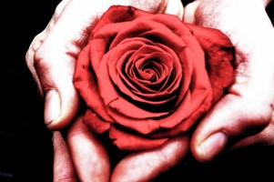 rose_in_the_hands_202283