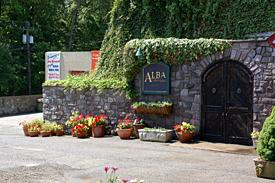 alba-vineyard
