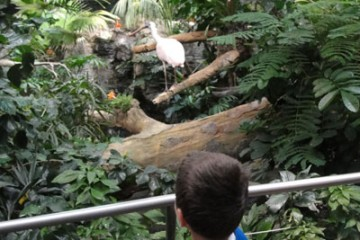 rainforest zoo