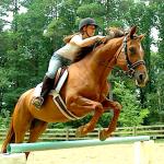 Falcon Camp Horse