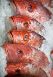 Kates Fish West Side MArket