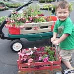 Where to Buy Ohio plants, perennials, annuals, herbs