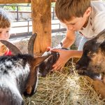 Annual Fair brings a Little bit of Country to Summit