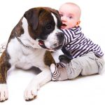 Babies & Dogs 101