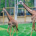 Welcome the Newest Additions to Turtleback Zoo.