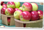 Millstone Creek Orchards – Apple Picking Near Raleigh!