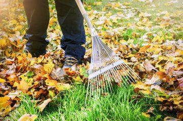 yard work raking leaves
