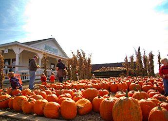 02_pumpkins