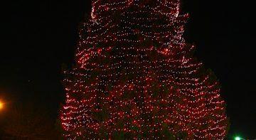 westfield-tree