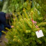 Ramsey Boy Scouts' Christmas Tree Sale