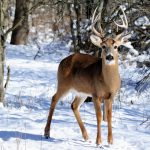 Deer Management taking place in local parks