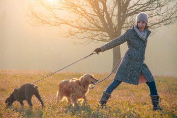 walking dogs outside