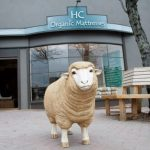 "Have You ""Herd"" About the Ridgewood's Missing Sheep"