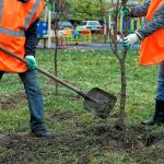A Tree Planted in your Yard – for free!