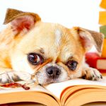Reading to a Dog: A Non-Judgmental Listener