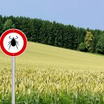 The Uptick in Ticks: What you need to know