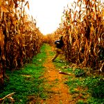 Fall Fun: Mazes, Ziplines, Pumpkin Picking and More