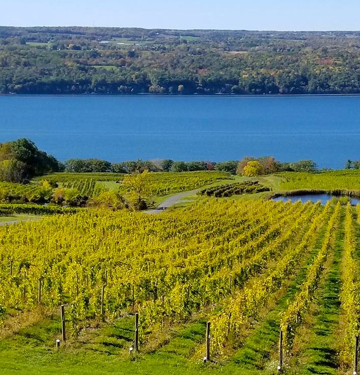 Wine Country: The Finger Lakes | Tips From Town