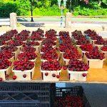 Farm to Table Fresh Produce in Ridgewood