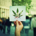 What You Need to Know About the Legalization of Marijuana